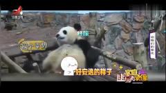 家庭幽默录像:熊猫宝宝晒太阳也太可爱了,圆