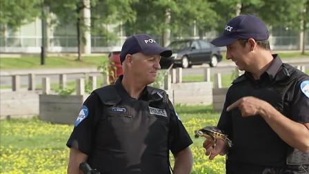 老外恶搞路人,国外警察怒踢乌龟引来众怒,结果大反转
