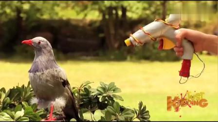 国外爆笑街头恶搞:路人体验激光玩具,误将鸽子弄得粉身碎骨