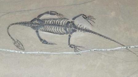 """传说中的龙存在吗?考古学家发现了""""龙""""的化"""