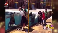 家庭幽默录像:没有对比就没有伤害,海狮:我