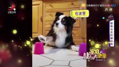 幽默家庭录像:狗狗你的表情我已经笑喷