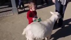小动物们恶搞人类,人们中招之后的反应,笑到