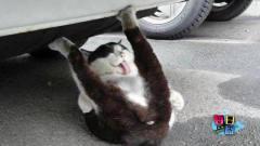 【每日一囧合辑】猫不会用猫砂盆去检查后发现