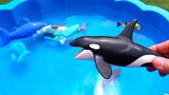 卡通小动物海龟海豚玩具展示