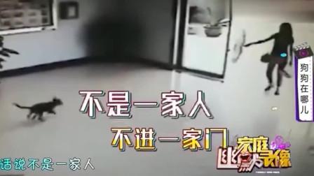 家庭幽默录像:一定是特别的缘分 ,才可以一路走来撞上一扇门 ,狗狗