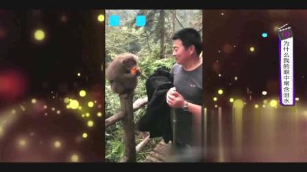 家庭幽默录像:游客给猴子一个橘子,这猴剥完皮后还知道在别人身上