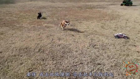 搞笑动物配音:要是动物都会说四川话,能把人