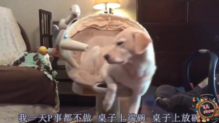 搞笑动物配音:自从狗子过上富裕生活,每天没