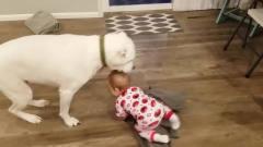 动物和婴儿搞笑视频