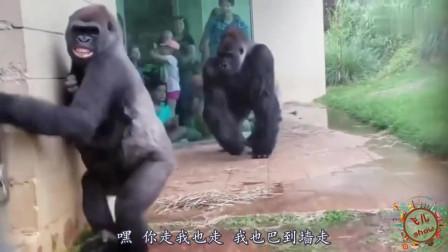 搞笑动物视频集锦,配上幽默的四川方言,能把