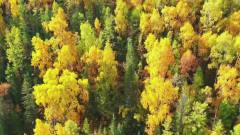 旅游风景——新疆.喀纳斯国家地址公园,秋天的