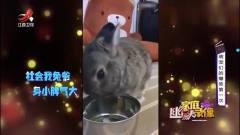 家庭幽默录像:这是我见过最有脾气的兔子了,