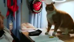 萌宠搞笑视频:猫:我脸上有答案吗?快写!!
