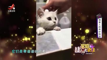 家庭幽默录像:喵星人可爱暴击,看完之后你一定会想养一只可爱的喵