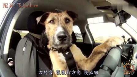 搞笑动物配音:要是动物都说四川话,能把人肚
