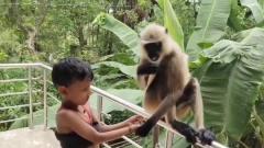 小朋友投喂猴子,看完想养系列!