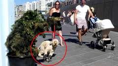 男子化妆成盆栽街头恶搞路人,差点把路人的狗