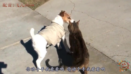 搞笑动物配音:要是动物会说四川方言,能把人