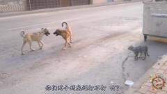 搞笑动物配音:当动物说起来四川方言,能把人