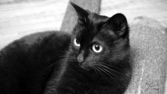 黑猫的日常,真是悠哉的一天呢!