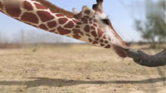 《创意广告》长颈鹿和大象打起来了