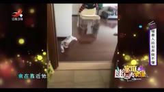 家庭幽默录像:喵星人对静止有着执念,看这只