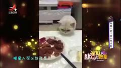 家庭幽默录像:喵星人在吃面前是没有一点尊严