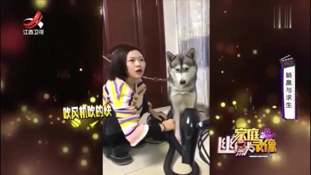 家庭幽默录像:给狗狗吹毛还有意外收获老公的