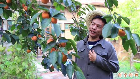 爆笑剧:大哥为防止美女偷柿子,竟开手机视频
