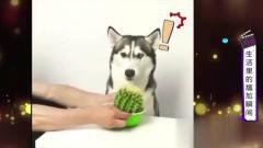 家庭幽默录像:仙人掌?你在逗老子?