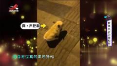 家庭幽默录像:声控玩具狗很常见但你见过真的