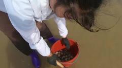 美女沙滩赶海寻新鲜海鲜,挖了几个小时挖到整