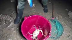 美女半夜赶海无人岛,螃蟹随手一找就是一斤多