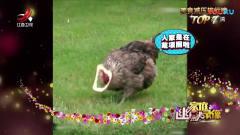 家庭幽默录像:传说这是只最洋气的母鸡!看土