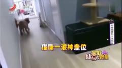 家庭幽默录像:猫咪逃生神步伐,这移形换位怎