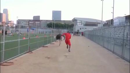 黑人职业运动员不自量力,挑战鸵鸟短跑