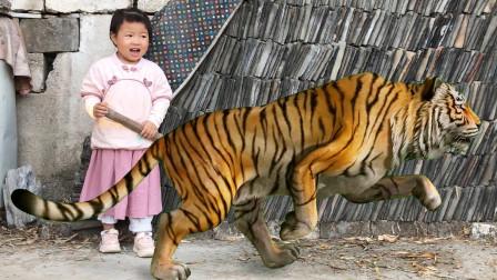 2岁小孩和姐姐在家,碰到一只会变身的傻老虎,