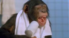 """小猩猩成精爱上洗澡,还知道每天打理""""头发"""""""