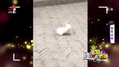 幽默家庭录像:环境真的很重要鸽子和孔雀在一