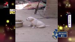 幽默家庭录像:这是几条不正常的狗狗 你见过学