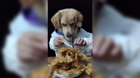 搞笑动物视频,赶走不开心