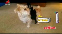 家庭幽默录像:动物界中的江湖风云,喵星派绝