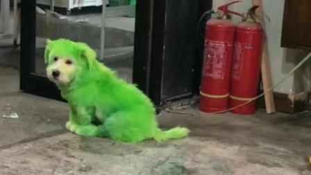 搞笑动物视频配音:你干嘛我还是只单身狗,有