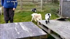 动物搞笑视频,笑出眼泪。