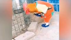 搞笑视频:现在的动物比人还会打扮,鸡还会跳