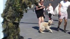 外国男子街头恶搞,没想到把路过的狗狗吓到飞