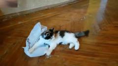 猫狗宠物动物搞笑合集