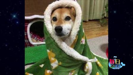 【每日一囧合辑】冬天恋爱小技巧…单身狗边流泪边做笔记