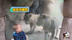 当熊孩子遇上搞笑动物,到底谁更能折腾?让你